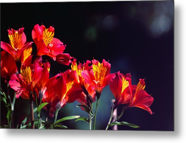 Red And Gold Metal Print by Peter Jenkins
