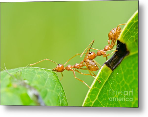 Red Ants Teamwork Photograph By Peerasith Chaisanit