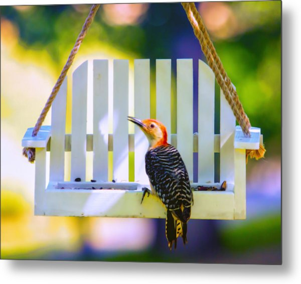 Red-belly Comes For Lunch Metal Print by Bill Tiepelman
