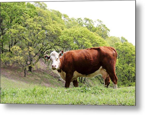Red Cow Metal Print