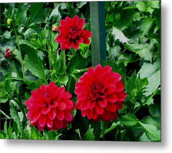 Red Flowers Metal Print by Kathy Long