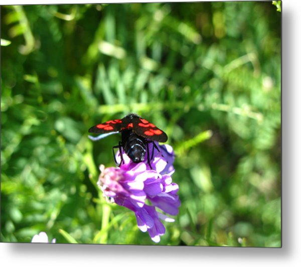 Red Fly Metal Print by Andonis Katanos