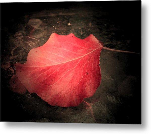 Red Leaf  Metal Print by Beth Akerman