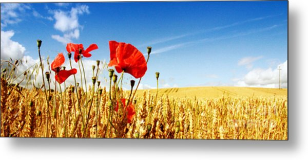 Red Poppies In Golden Wheat Field Metal Print by Catherine MacBride