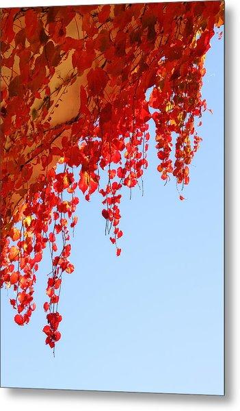 Red Vine Metal Print
