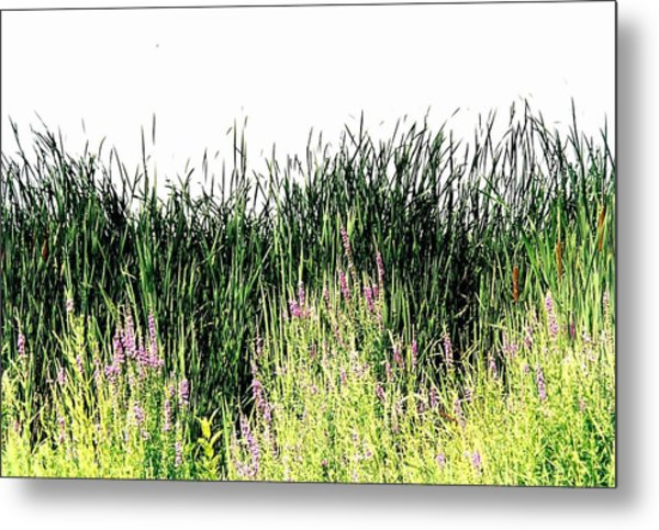 Reeds Lake Grass Metal Print by Suzanne Fenster