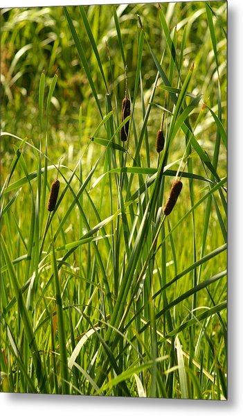 Reeds Metal Print by Margaret Steinmeyer