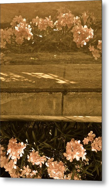 Reflections Metal Print by Rachel Rodgers