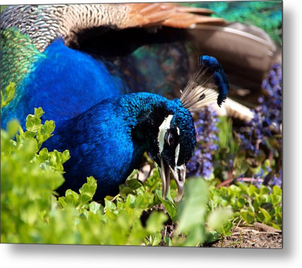 Regal Colors Metal Print by Christy Woods