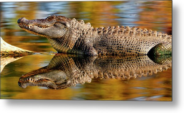 Relection Of An Alligator Metal Print