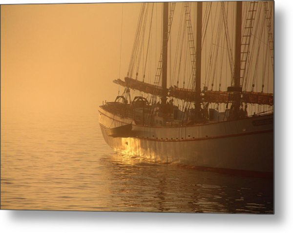 Resting In The Morning Sun Metal Print