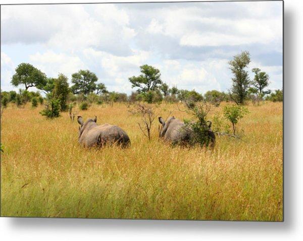 Rhino Pair Metal Print by Deborah Hall Barry