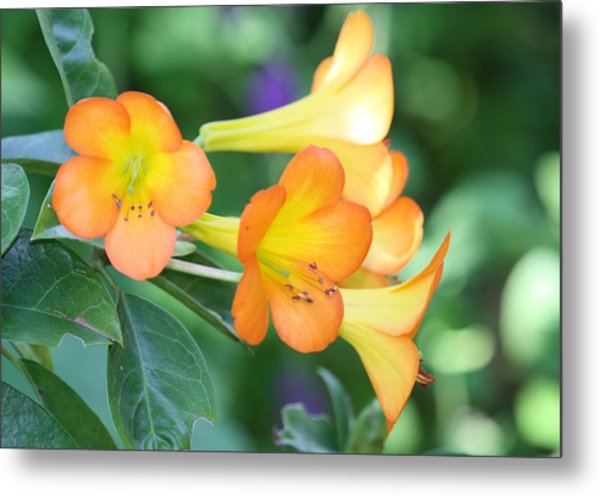 Rhododendron  Metal Print by Andrea  OConnell