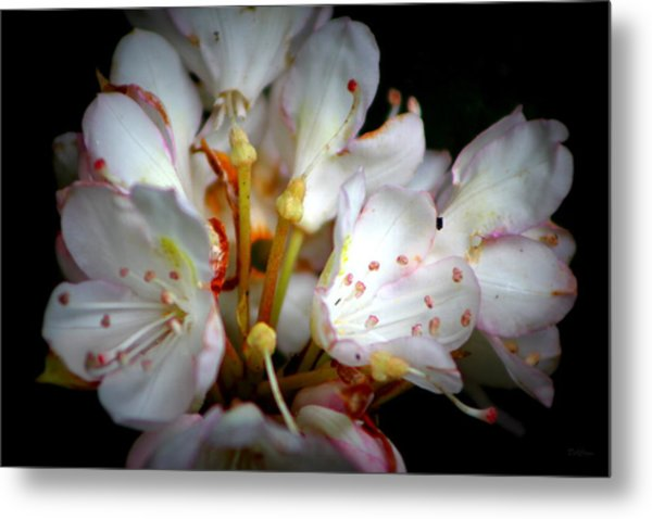 Rhododendron Explosion Metal Print