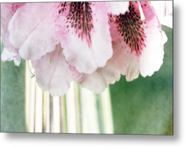 Rhododendron Refraction Metal Print by Margaret Hormann Bfa