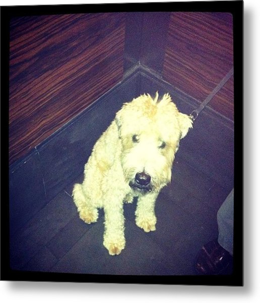 #rich #dog #lives #in #penthouse #white Metal Print