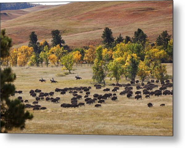 Riders Turning The Herd Metal Print