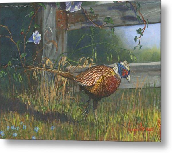 Ringneck Pheasant Metal Print by Jeff Brimley