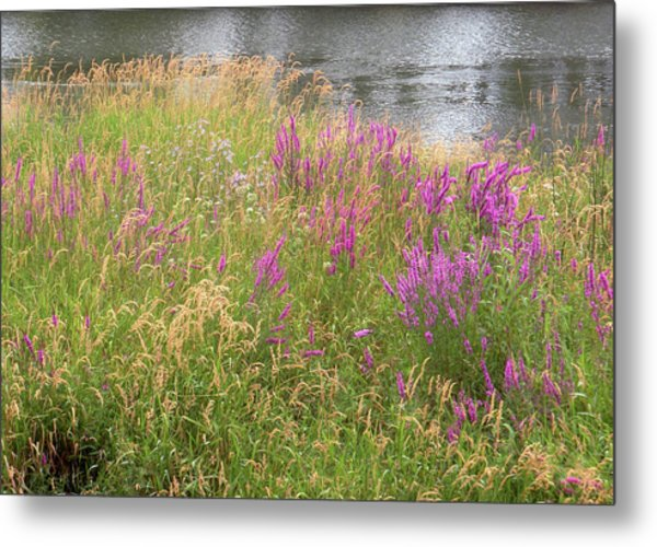 River Flowers Metal Print by Fred Russell