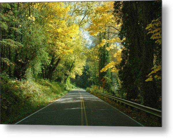 Road Through Autumn Metal Print