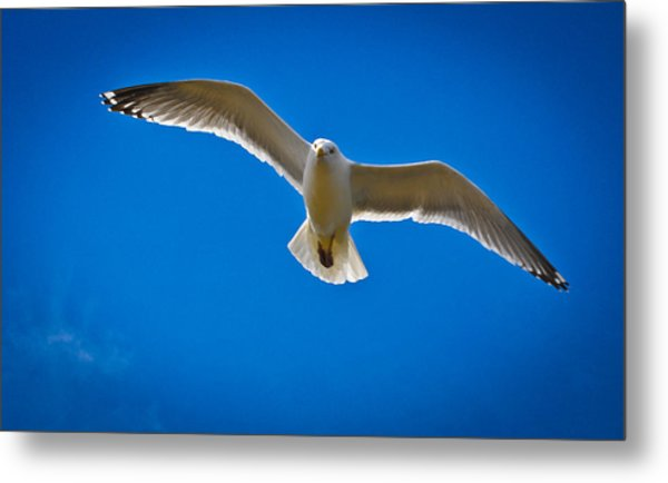 Rockport Gull Metal Print by Erica McLellan