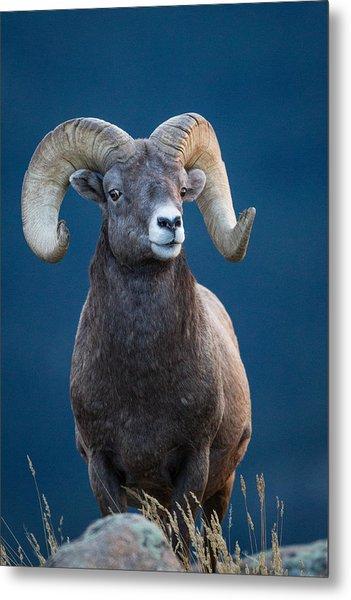 Rocky Mountain Big Horn Metal Print