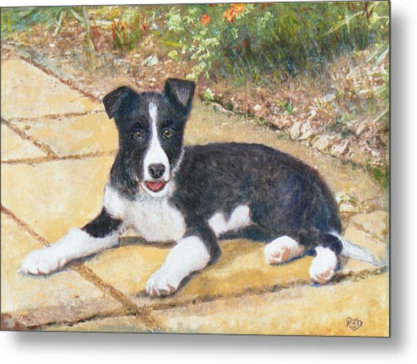 Rory Border Collie Puppy Metal Print