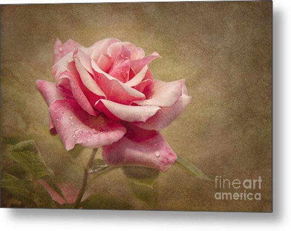 Rose Delight Metal Print