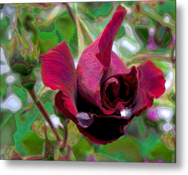 Rose Emerging Metal Print