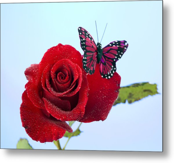 Rose Red Butterfly Isolated On Blue Metal Print