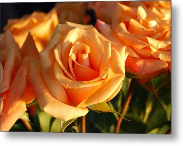 Roses For Me Metal Print
