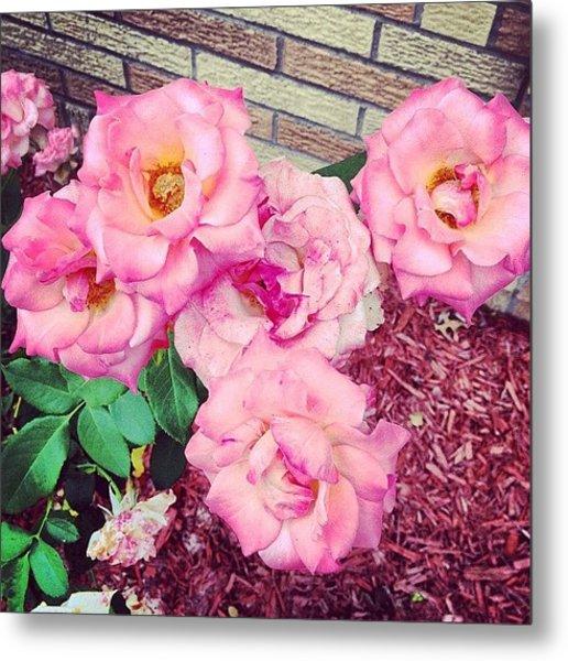 #roses Metal Print