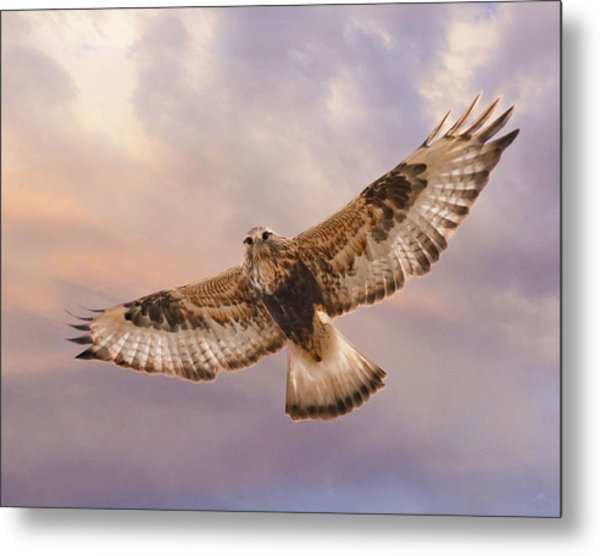Rough Legged Hawk Metal Print
