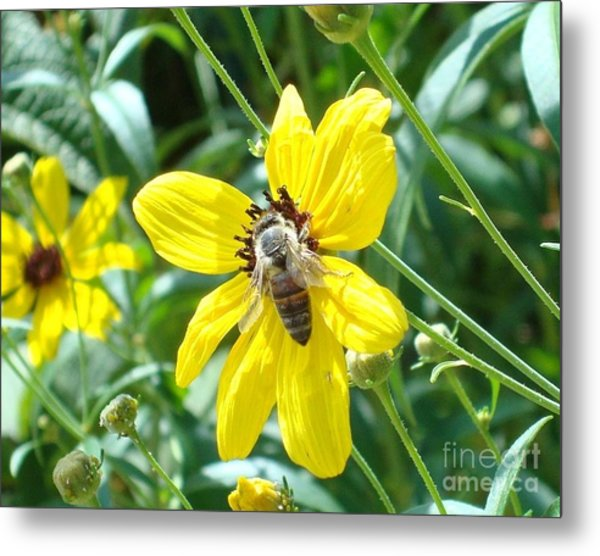 Rumble With A Bee Metal Print by Tina McKay-Brown