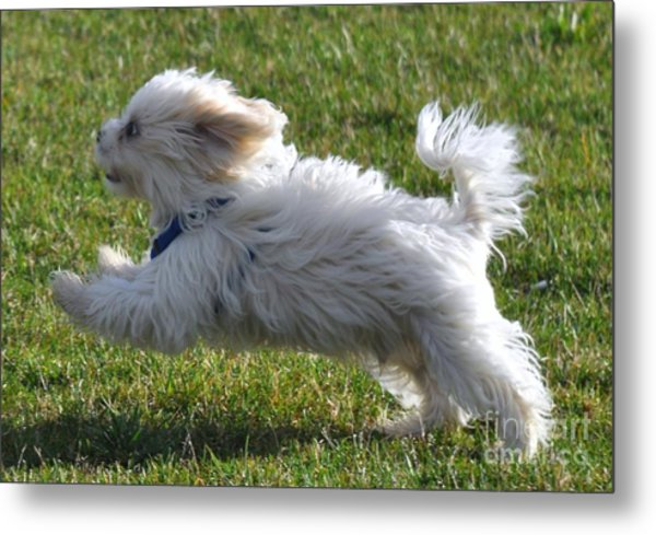 Run Like The Wind Metal Print