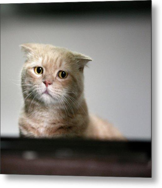 Sad Cat Metal Print by LeoCH Studio