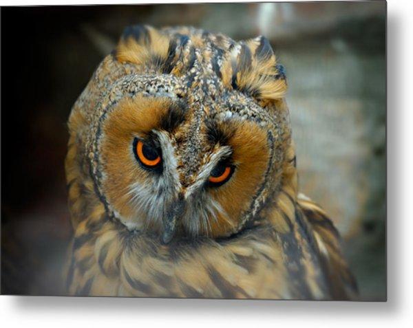 Sad Owl Metal Print