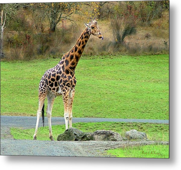 Safari Giraffe Metal Print