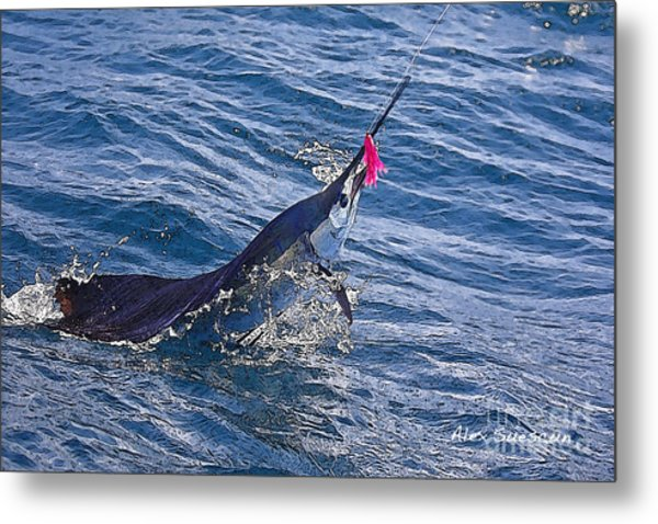 Sailfish Dance Metal Print