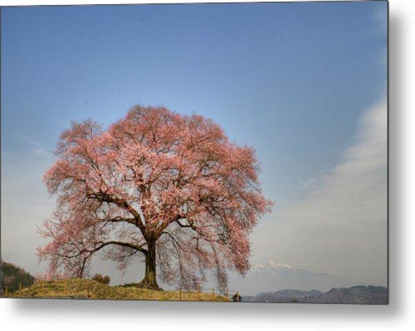 Sakura Sakura 2 Metal Print