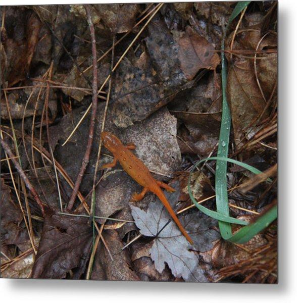 Salamander Metal Print by Lali Partsvania