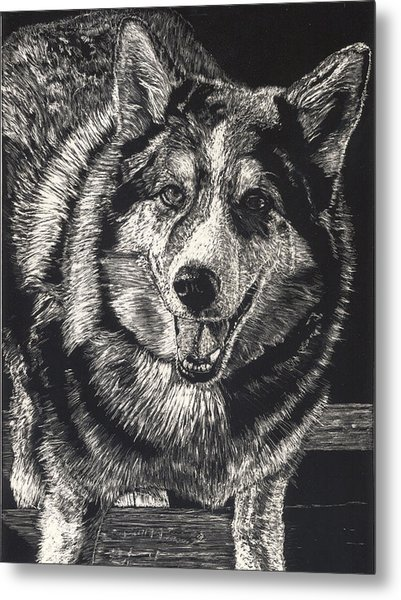 Sarge The Dog Metal Print by Robert Goudreau