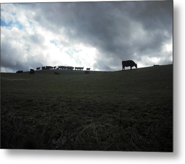 Sauvie Island Metal Print