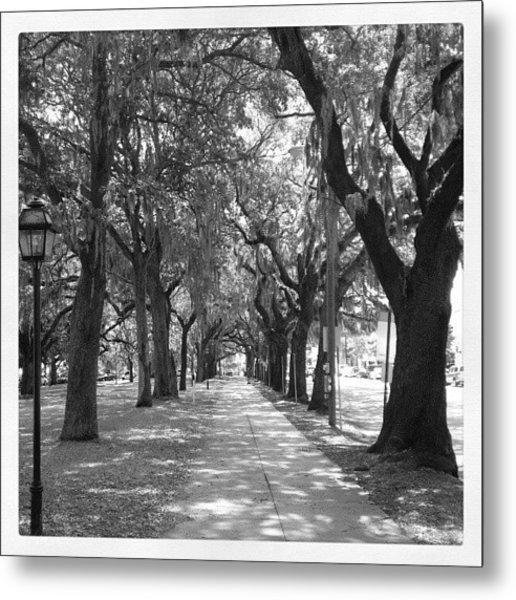 Savannah's Willow Metal Print
