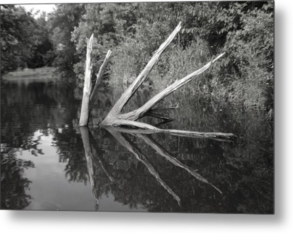 Scenes From The Kayak    Downed Trees Of The Ec River Back Waters Metal Print by Artist Orange