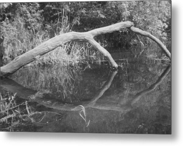 Scenes From The Kayak.   Downed Trees Of The Ec River Back Waters Part 2 Metal Print by Artist Orange