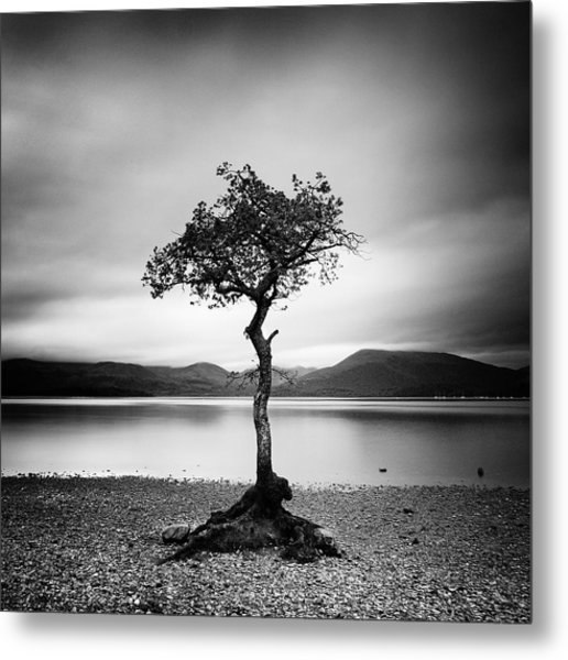 Scotland Milarrochy Tree Metal Print