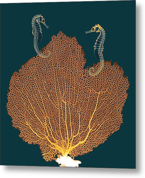 Sea Fan And Seahorses, X-ray Metal Print by D. Roberts