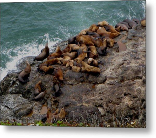Sea Lions 3 Metal Print by Kathy Long