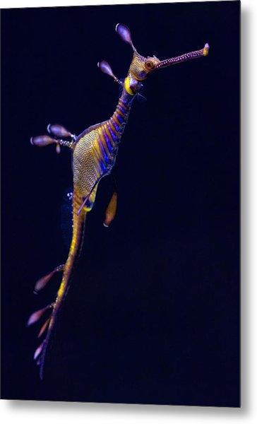 Seadragon  Metal Print by Donna Pagakis